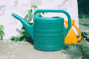 Succulent plants need careful watering