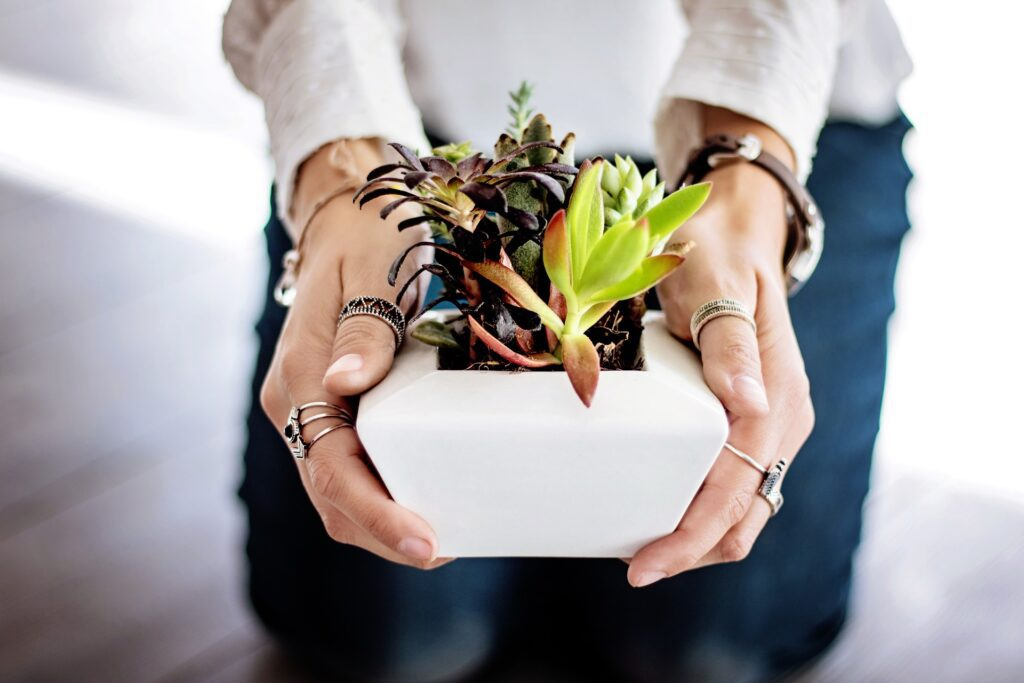 Fascinating types of succulents
