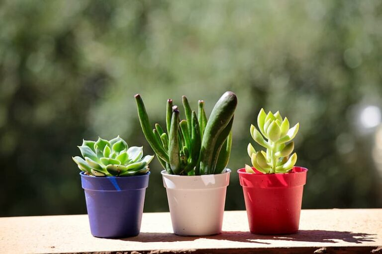 low light succulents to add charisma to your Indoors