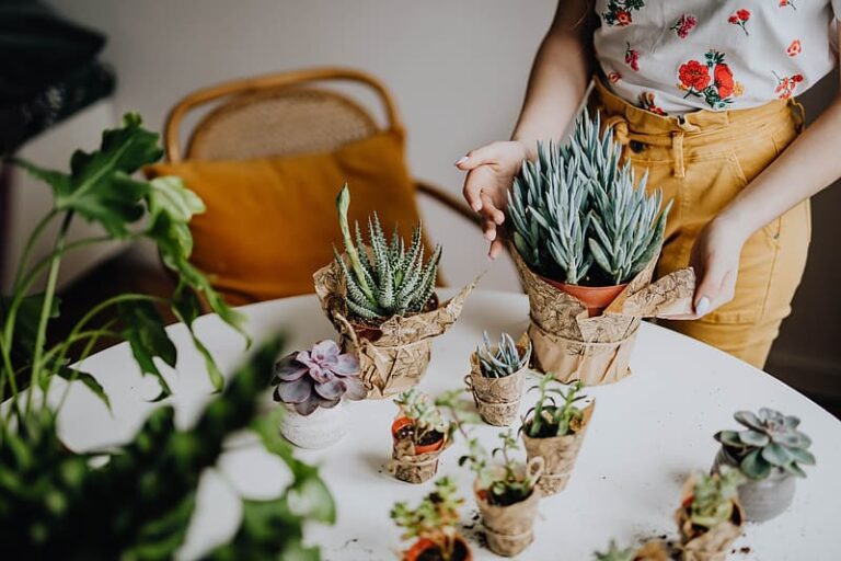 Baby Succulents are Perfect House Decoration