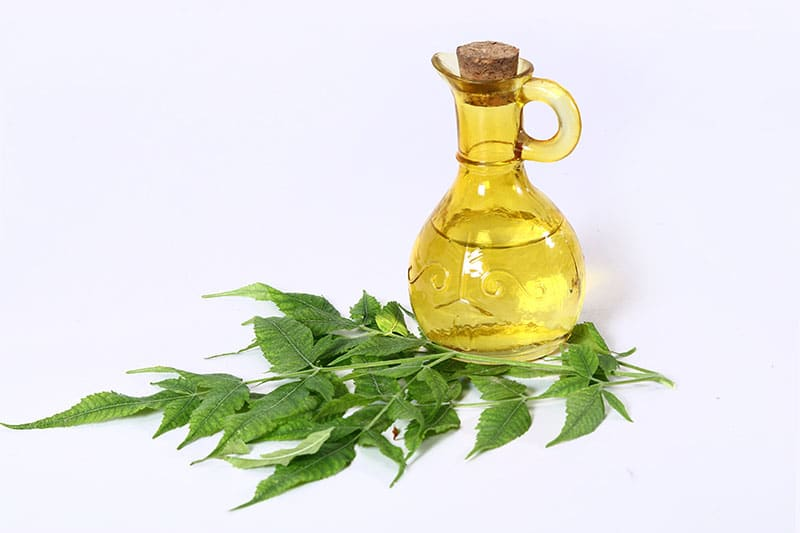 Neem Oil for succulents