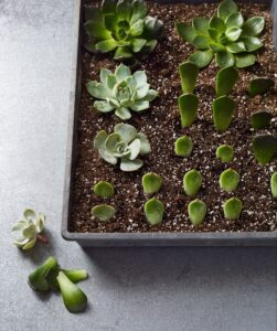 Propagation from leaves