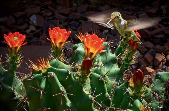 Pollination of blooming succulents